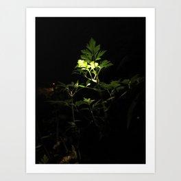 Nighttime in the Garden, 3 Art Print