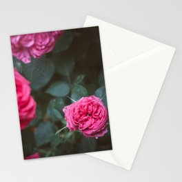 Roses blossom Stationery Cards