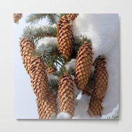 Watercolor Cone Engelmann Spruce 02, Rocky Mountain National Park, CO Metal Print