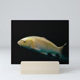 A lucky golden colored carp/Nishikigoi(Japanese Colored Carp) Mini Art Print