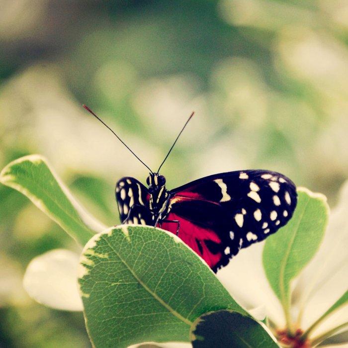 peek a boo butterfly Duvet Cover