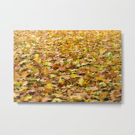 Beautiful light brown autumn leaves Metal Print