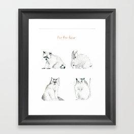 Fur For Four Framed Art Print