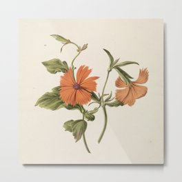 M. de Gijselaar - Yellow Chinese rose (1820) Metal Print