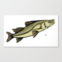 Snook out of water Canvas Print