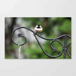 Fluffy Chickadee Canvas Print