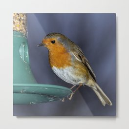 Robin comes for lunch Metal Print