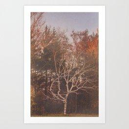 vintage tree Art Print