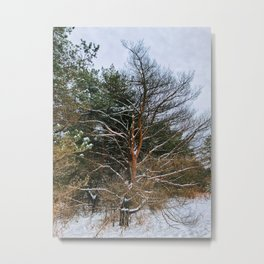 Without its leaves. Leafless Metal Print