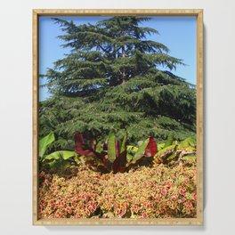 Cedar Tree in Greenwich Gardens, London Serving Tray