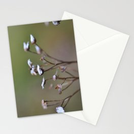 Grass Seeds Stationery Cards