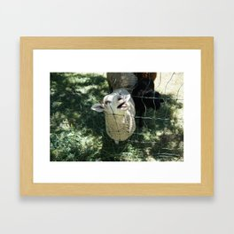 Funny Lamb Framed Art Print