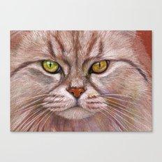 White Cat CC15-01 Canvas Print