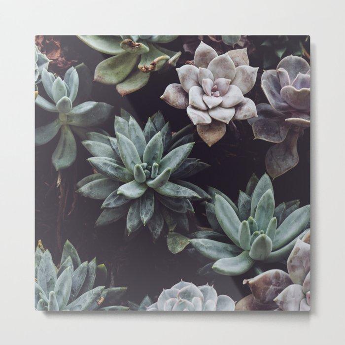 Dreamy succulents Metal Print