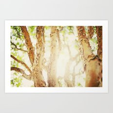 Trees/Light Art Print