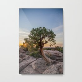 A Tree Grows Metal Print
