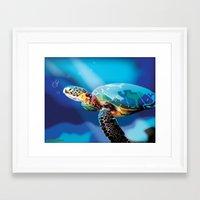 sea turtle Framed Art Prints featuring Sea Turtle by Natasha Alexandra Englehardt