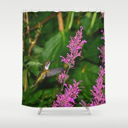Hummingbird and agastache flower 60 Shower Curtain
