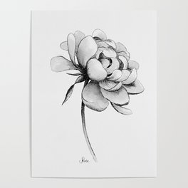 Peony Flower, Black and White Poster