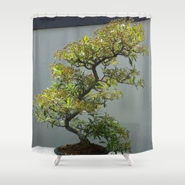 Bonsai Tree- Nepal Firethorn Shower Curtain