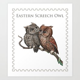 Eastern Screech Owl (Megascops asio) Art Print
