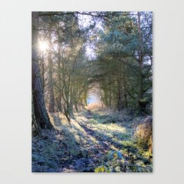Winter Woodland Walk Canvas Print