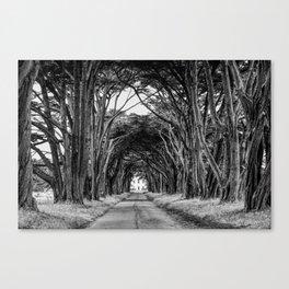 Tree Tunell Canvas Print