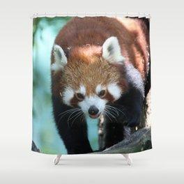 Red_Panda_2015_0702 Shower Curtain