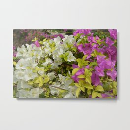 The Joy Of Color Metal Print