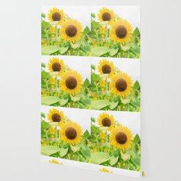 A field full of sunflowers Wallpaper