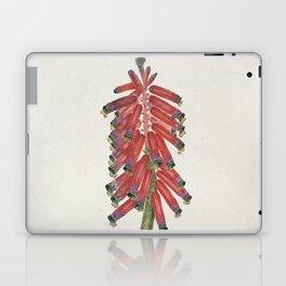 Robert Jacob Gordon - Lachenalia bulbifera - 1777/1786 Laptop & iPad Skin