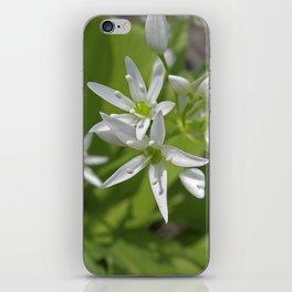 bear´s garlic bloom II iPhone Skin