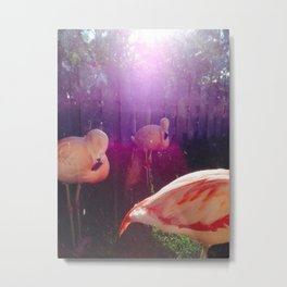 Hot Pink Tail Feathers  Metal Print