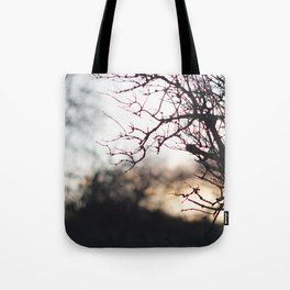 Sunset through trees Tote Bag