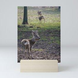 Roe Deer on Jeju Island Mini Art Print