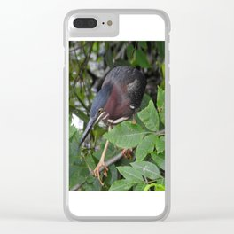 Green Heron on the Hunt Clear iPhone Case