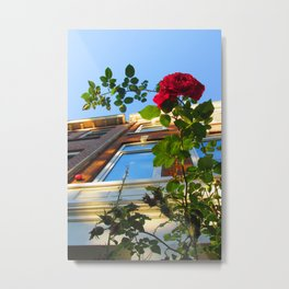 Urban Rose Metal Print