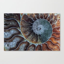 Spiral Ammonite Fossil Canvas Print