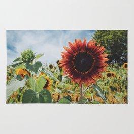 Red Sun (flower) Rug