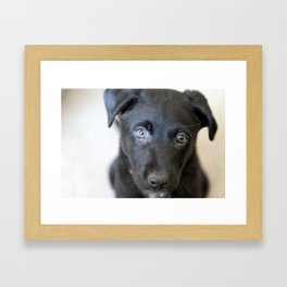 Puppy Face Framed Art Print