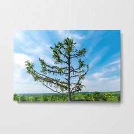 Conifer Tree Top Metal Print