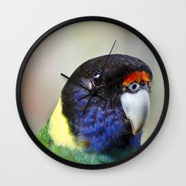 Australian ringneck Parrot  Portrait Wall Clock