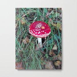 mushroom - toadstool Metal Print