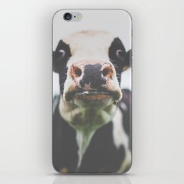 Funny Cow Photography print iPhone Skin