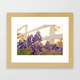 Bluebonnets Framed Art Print