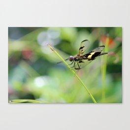 Varigated flutterer Dragonfly Canvas Print