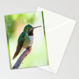 Hummingbird Pose Stationery Cards