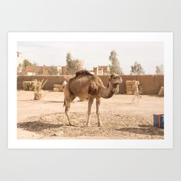 Desert Life With Camel - Sahara, Morocco Art Print