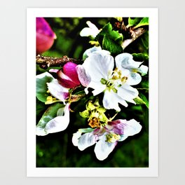 Gifted By Nature Art Print