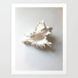 Conch Still Life Art Print